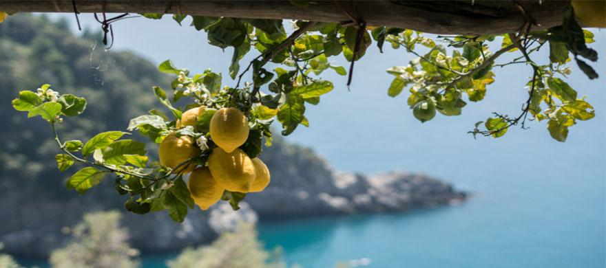 """""""Conosci il paese dove fioriscono i limoni?"""""""